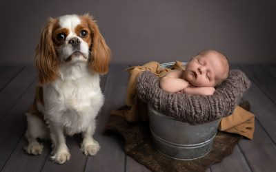 Babies and dogs? Sure – why not!