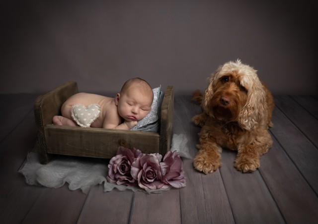 Newborn Photographer in Milton Keynes baby girl with dog spaniel