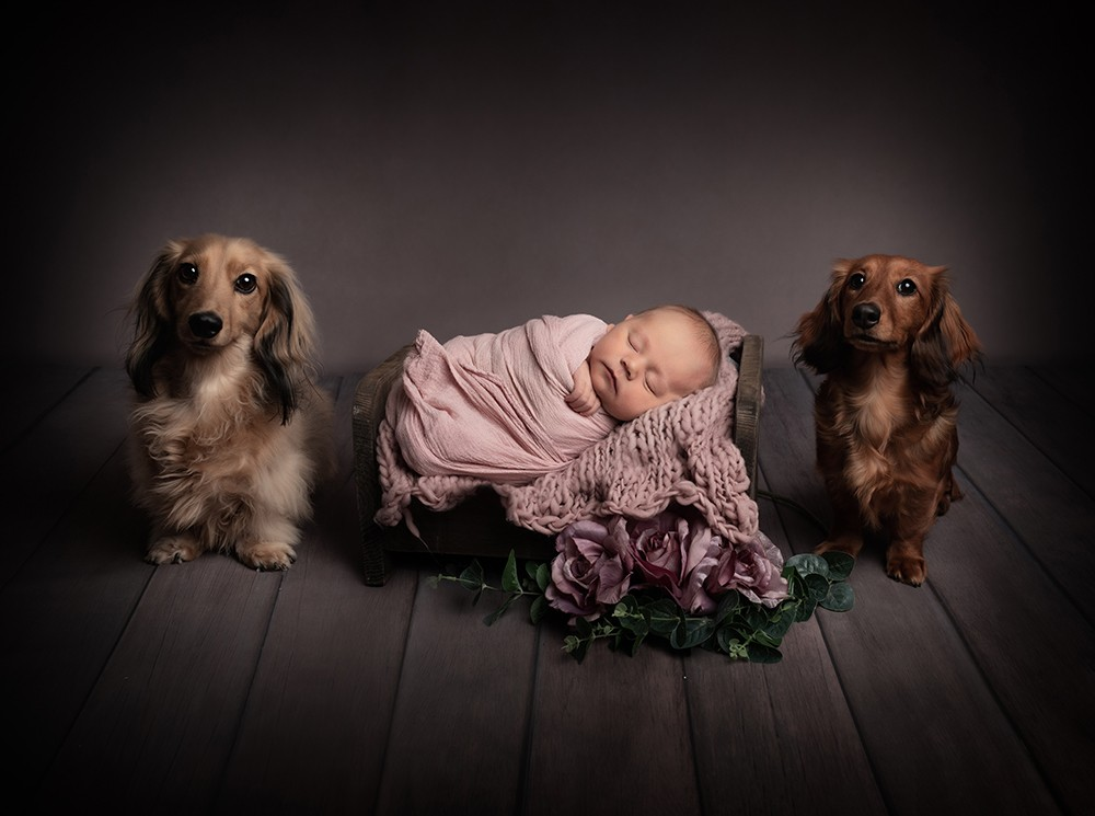 Newborn Photographer in Milton Keynes baby girl with dogs baby shoot baby photos