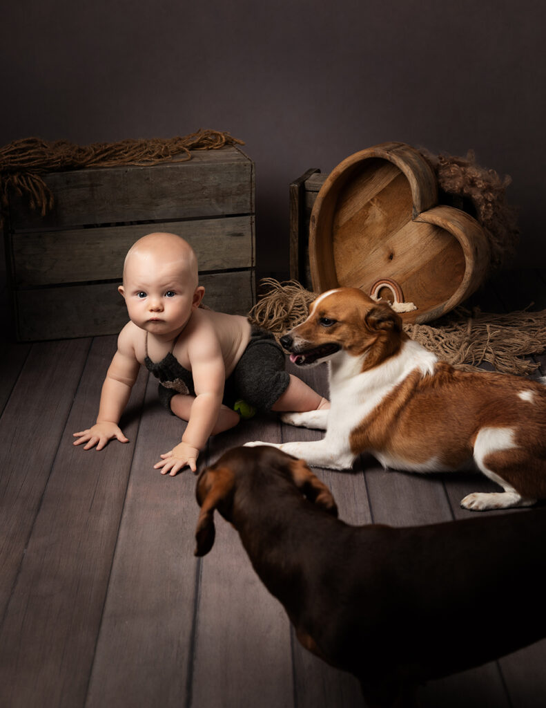 sitting baby with pet dogs by Baby Photographer Bedford