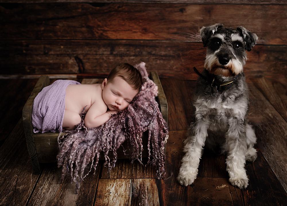 baby with dog photoshoot newborn photographer in northampton and milton keynes